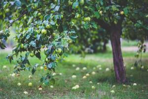 Garden and Yard Clearances